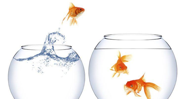 pez saltando de una pecera a otra, simil de la oportunidad becas fundacion universia